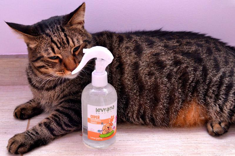 В зоомагазинах и ветеринарных клиниках предлагаются спецпрепараты. Они разлагают остаточную органику и убивают резкий запах