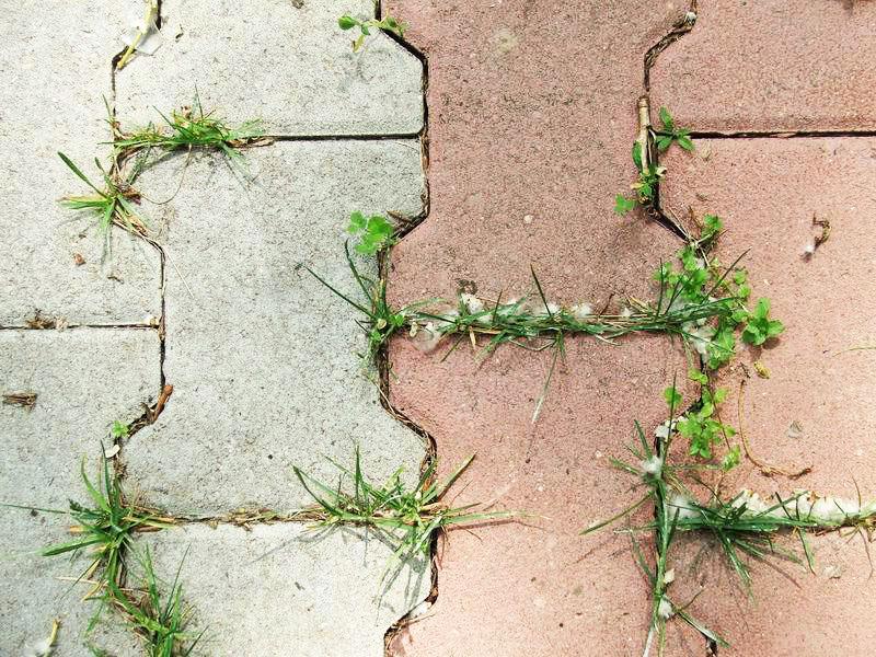 Как можно хитро заделать щели в тротуарной плитке, чтобы трава не портила вид