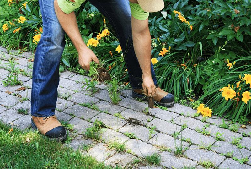 Можно попробовать удалить траву вручную, но процесс это очень трудоёмкий