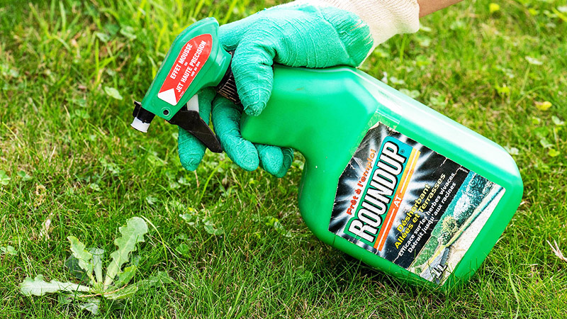 Самый токсичный и действенный гербицид – «Раундап»