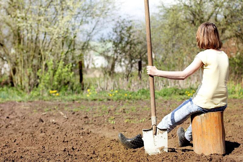 Так что грядку следует вскопать за пару недель, а перед посадкой разровнять граблями и пролить лунки водой, этого достаточно