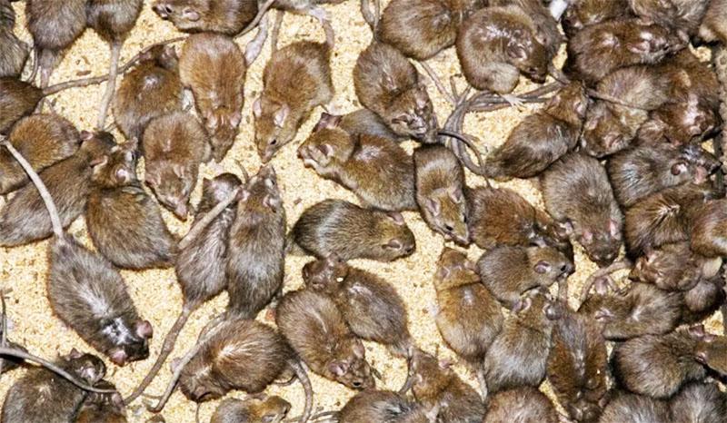 Именно по этой причине будильник, установленный в земле, может заставить колонию мышей искать убежища на другом участке