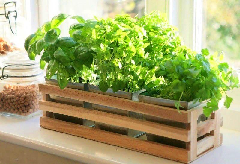 Как успеть вырастить зелень к Новому году