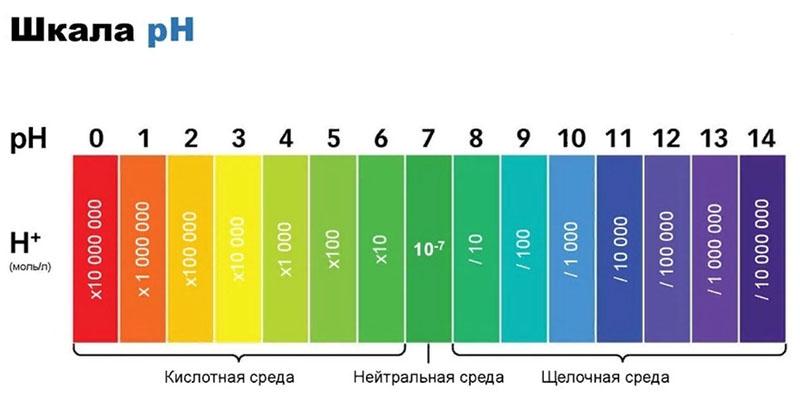 Так что, прежде чем заливать воду, проверьте её pH – он должен быть нейтральным