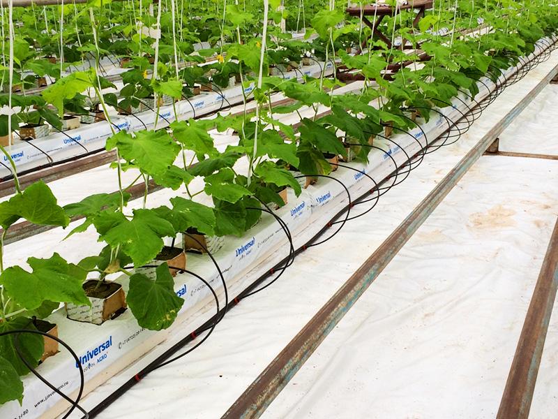 На этом субстрате можно выращивать любые культуры: томаты, огурцы, перец, баклажаны, салатную зелень, любые цветы