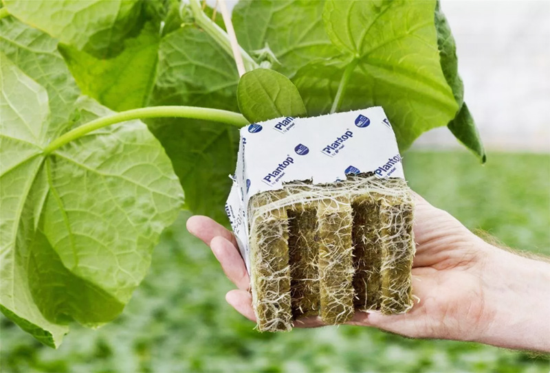 В результате вы получите современную высокоэффективную теплицу, в которой, как на дрожжах, будут расти овощи или, к примеру, клубника