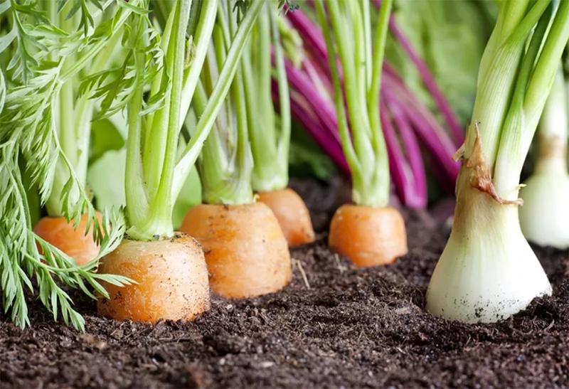 Какую практическую пользу приносит компост на участке